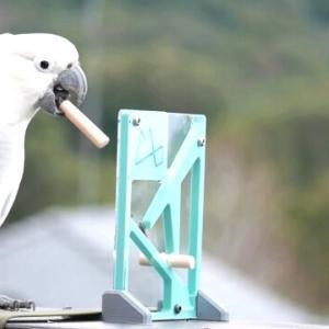 鳥のかしこさってすごい!立体パズルをあっさりと解くキバタンに脱帽