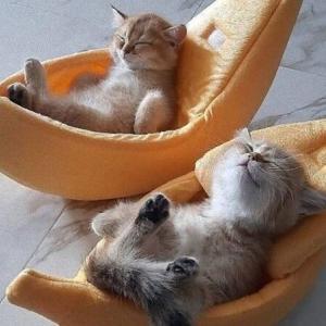 キュートな子猫たちは「心を癒すお薬」に違いない!優しい気持ちになるための処方箋はいかが?
