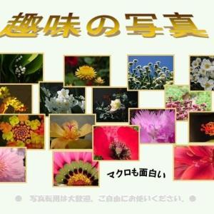 アメジストセージ シソ科 紫水晶の色をしたセージの花でハーブの一つです。今日の野鳥:カワセミ