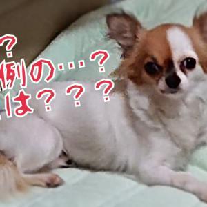 【預かりブログ ラム】 はいは~い恒例の!!!
