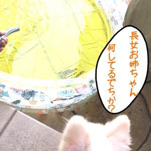 【預かりブログ ラナ】ラナからの暑中見舞い(笑)
