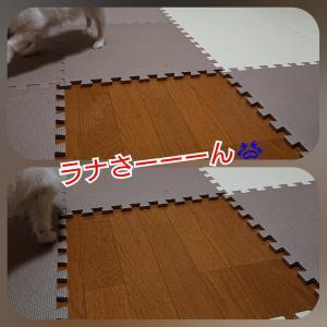 ラナーー( ̄▽ ̄;)【預かりブログ ラナ】