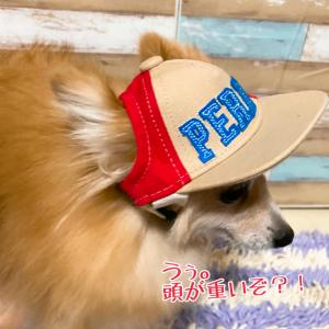 """【預かりブログ ポメ みすず】恒例といえば② """"☆2021年ゆいまーるチャリティ"""
