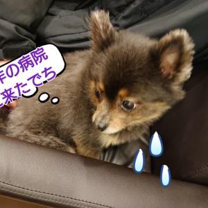 良し✌️減薬(*^▽^*)アンジュ