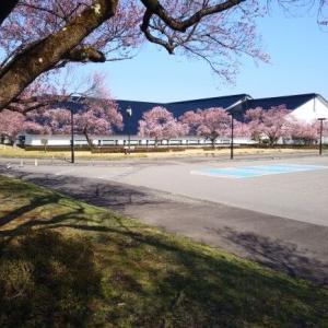 会津・桜が咲き始めました