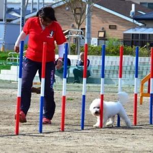 アジリティー競技会2020in山田町