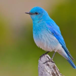 あなたの青い鳥の見つけ方