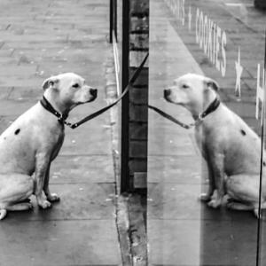 「人は鏡」に惑わされないために