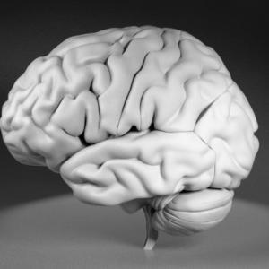 脳の中にわたしはいるか?