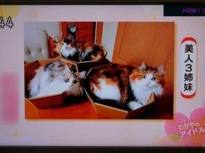ビジン姫様、三姉妹@オーナー様から届きました大会