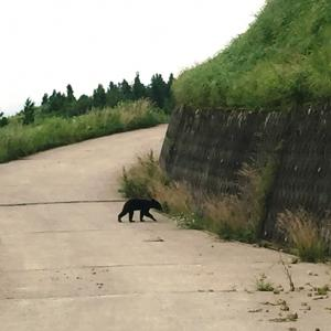 クマさんに出会った部子山ドライブ