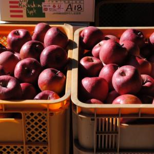 年末年始・りんごと加工品の販売