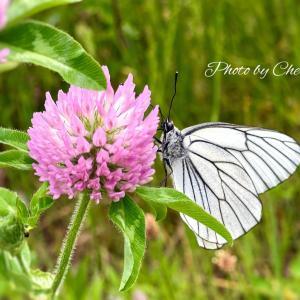 蝶々がいたので写真を撮っていたら…