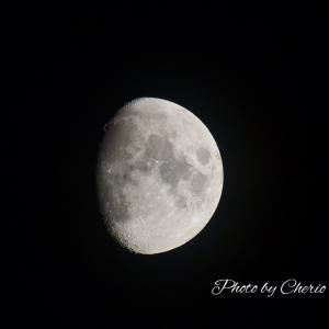 月がふっくらしてきました