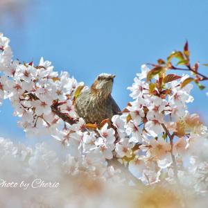 春の花と鳥たち