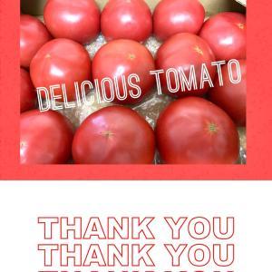 美味しいトマトをいただきました