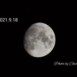 月が満月に向けてふっくらとして来ました