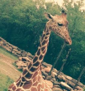 ☆写生大会 at Detroit zoo ☆