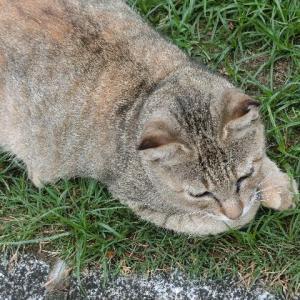 さくら猫はがんばり猫