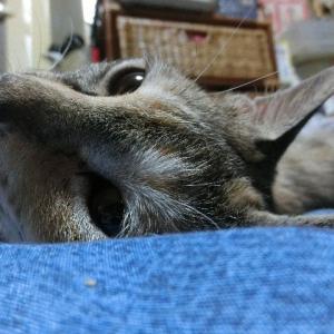 梅雨入り・猫やる気なく眠い