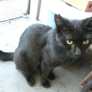 二匹の黒猫、伯母と甥です