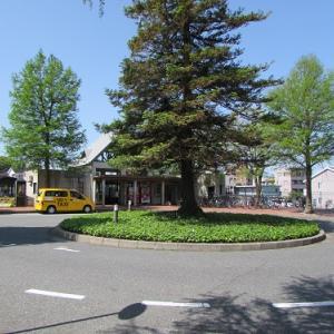 鳥取大学前駅前ロータリーの、大きな木。 【2018年05月 鳥取県鳥取市】