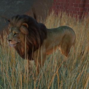 【Planet Zoo】ライオン飼育開始