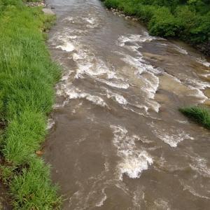 今年も大雨、サクラマスもテンカラも鮎も厳しい