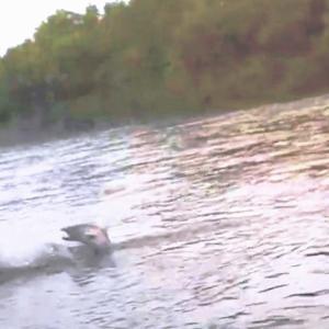 超大型サクラマスの釣れる条件追加!