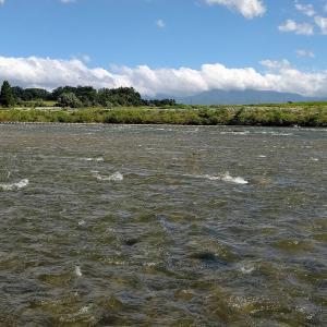 今年の最上川の鮎釣り