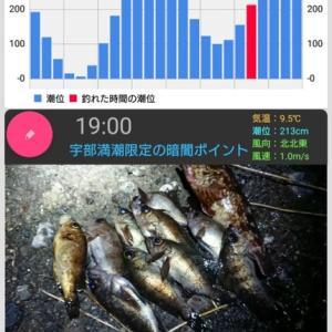 魚釣りデータ
