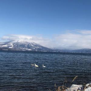 猪苗代湖の美しさに感激。水面に浮かぶ白鳥と青空、そして雪景色。