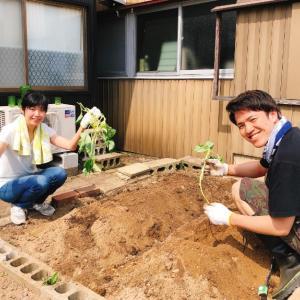 さつまいもの苗植えました。Hana工房のミニ畑!