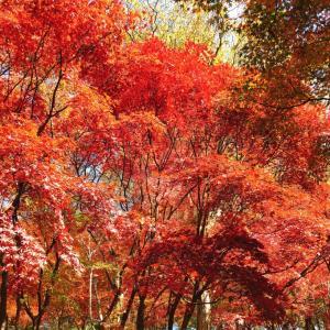 西山公園の紅葉編:さばえインスタ映えツアー #本当は教えたくない鯖江のここ