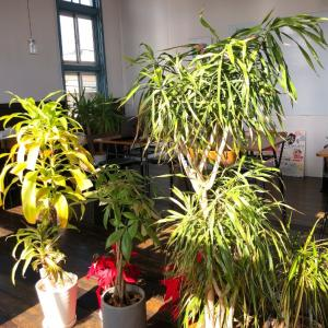 久しぶりに青空快晴!植物たちを日向ぼっこさせました。
