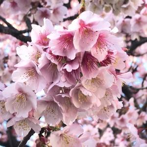 4月横浜出張サロンご予約受付