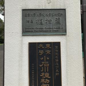 東京大学大学院理学系研究科附属植物園(小石川植物園)