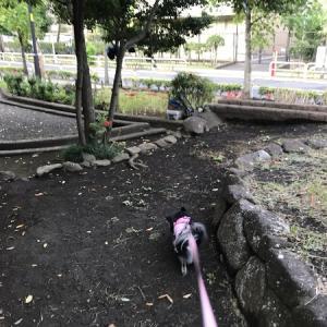シオンの庭と高山野菜