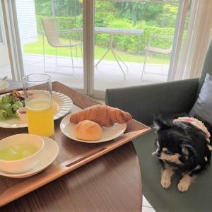 愛犬と一緒にホテルの朝食とワンワンバスタイム(朝風呂) in 箱根