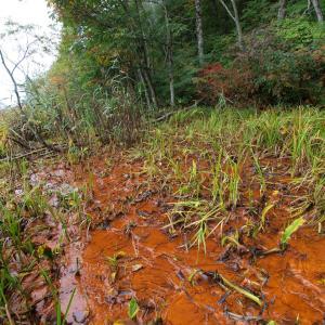 謎の湿原「赤ヤチ」に森林鉄道の痕跡を探して・・・・
