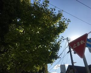 妙見山〜るり渓〜423号線戻り