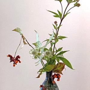 藤袴と吊り花の実を活けてみました。