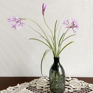 庭の花だより ツルバギア・ビオラケア