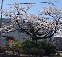 仙台市議会議会運営委員会が開かれ、6日は議員協議会