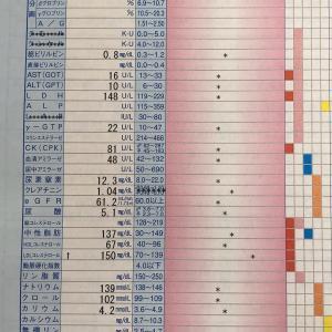 恒例の私の血液データ