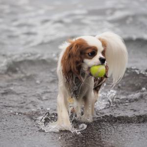 ボールが大きい(>_