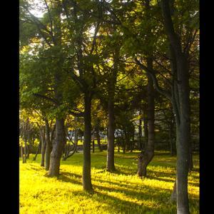 木漏れ日、秋