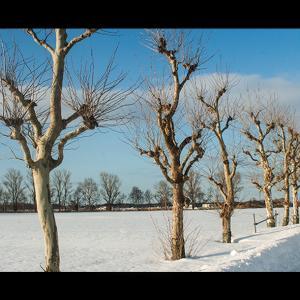 枯木と雪原と