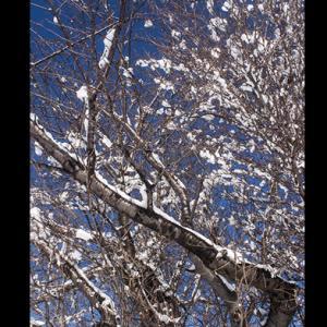 見事な雪の華
