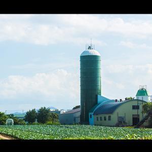 牧舎と野菜畑
